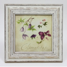 French Square Frame CLEMATITES