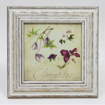 French Square Frame Clematis